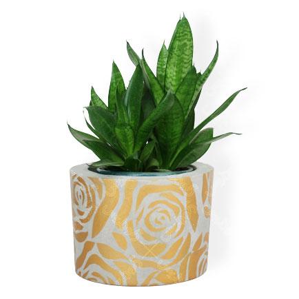 گلدان سیمانی رز طلایی